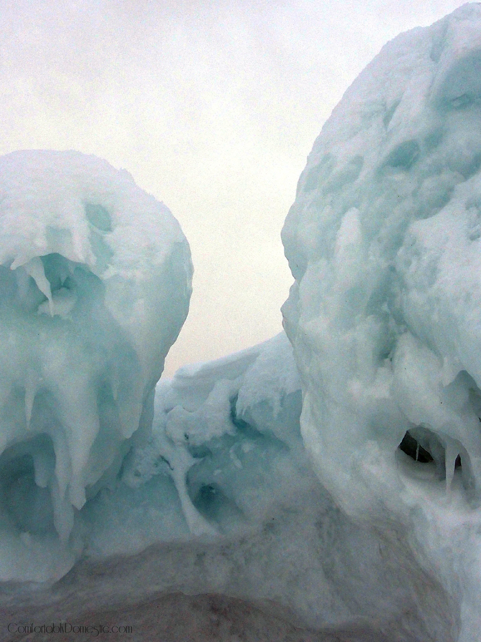 peering out of the ice