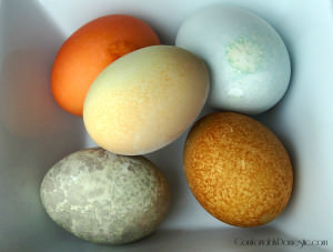 Natural Easter egg dyes are a healthier way to decorate Easter eggs, especially for those with allergies to food dyes. Learn how to make natural egg dyes here!