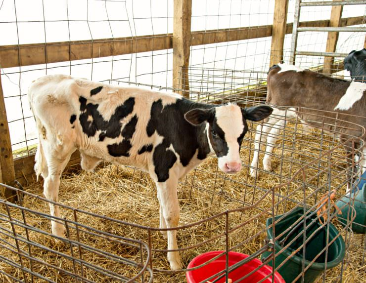 5 Minutes with a Farmer Nu-Dream Dairy Interview with Katie-Dellar| ComfortablyDomestic.com